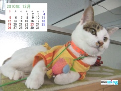 201012-fuu-1024_768 (240x180)