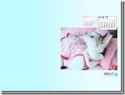 201107-fuu1-1024_768_thumb
