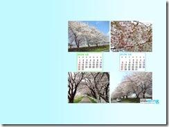 201204-sakura-1024_768