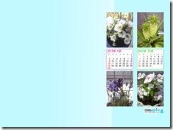 201209-flower-1024_768
