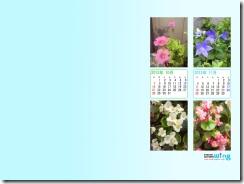 201210-flower-1024_768